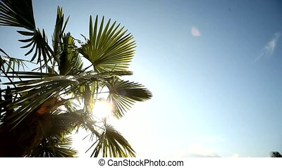 Palm tree with lens flare