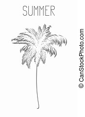 Palm tree with shadow