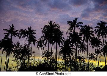 Palm tree with sky at night.