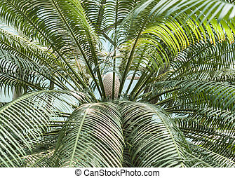 palm tree with the fruit