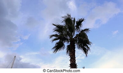 palm tree with white clouds time lapse