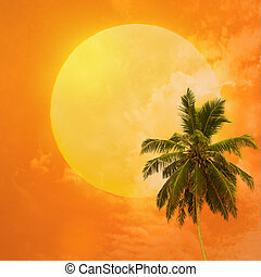 Palm trees a on sunset background