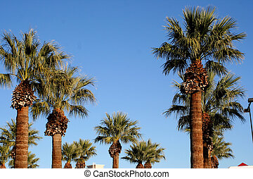 Palm Trees - a view of palm trees against the blue sky