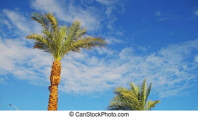Palm Trees Against a Blue Sky. Summer Background