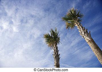 Palm trees against blue sky.