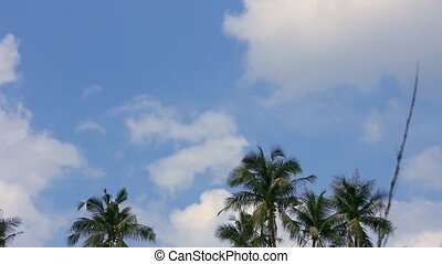 Palm trees against blue sky. Time lapse. HD. 1920x1080