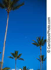 palm trees against blue sky with the little moon