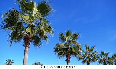 Palm trees against the blue sky in the resort town