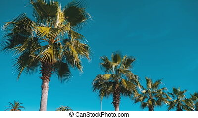 Palm trees against the blue sky in the resort town. A row of...