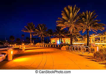 Palm trees along a path at night in Clearwater Beach, Florida.