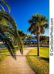 Palm trees along a path in Daytona Beach, Florida.
