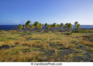 Palm Trees along the Coast, Hawaii