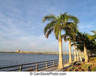 Palm trees along the Manatee River in Bradenton, Florida...