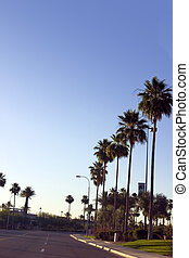 Palm Trees Along the Road of a Strip Mall