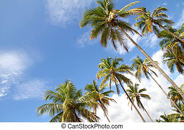 Palm Trees and a beautiful blue sky. Photo taken in Bahia,...