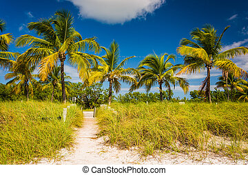 Palm trees and beach path at Smathers Beach, Key West, Florida.