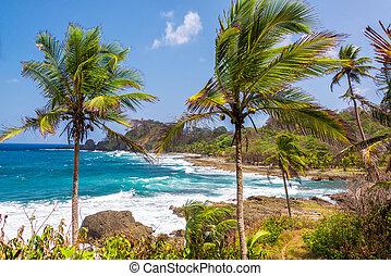 Palm Trees and Blue Sea