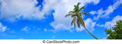 Palm trees and blue sky background.