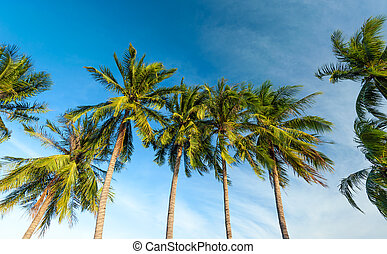 Palm trees and blue sky tropical background