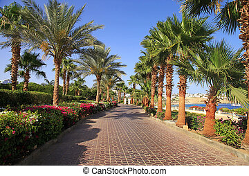 Palm trees and footway, Sharm el Sheikh, Egypt - Palm trees...