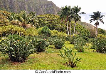 Palm trees and greenery in rural Oahu.