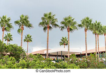 Palm trees and hotel in the park.