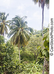 Palm Trees and Lush Plants in a Rain Forest