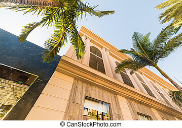 Palm trees and luxury buildings in Rodeo Drive