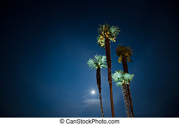 Palm trees and moon light