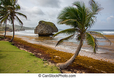 Palm Trees and Rock Formations at the Beach