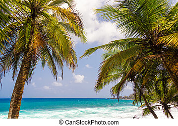 Palm Trees and Seascape