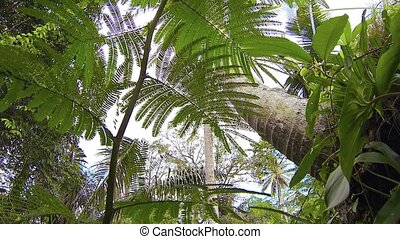 Palm Trees and Sky from Beneath Surface Vegetation -...