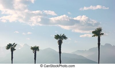 Palm trees and sky, mountains. Beautiful view of nature.
