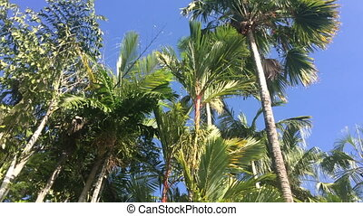 Palm trees and swimming pool in a tropical resort in...