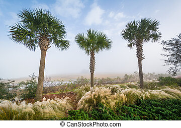 Palm trees and wetland along the Cooper River at the ...