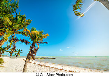 Palm trees and white sand in Smathers Beach