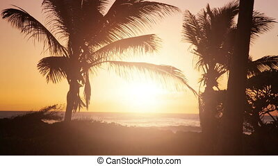 palm trees at beach at sunset with direct sun
