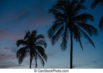 Palm trees at dawn in Cuba