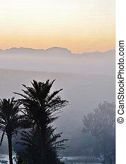 Palm trees at dawn