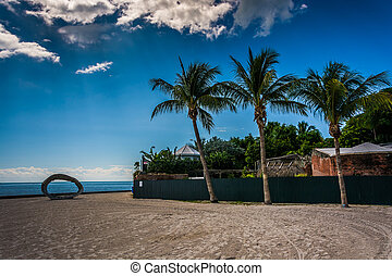 Palm trees at Higgs Beach, in Key West, Florida.