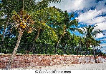 Palm trees at Higgs Beach, Key West, Florida.