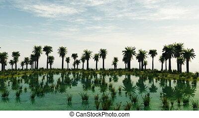 Palm trees at laguna island. sunny day