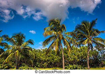 Palm trees at Smathers Beach in Key West, Florida.