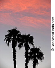 Palm Trees at Sunris - 3 palm trees silhouetted against a ...