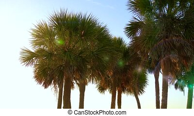 Coconut palm trees, beautiful tropical background - Palm...