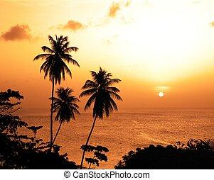 Palm trees at sunset, Tobago.