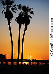 Palm trees at the beach at sunset in Huntington Beach, California