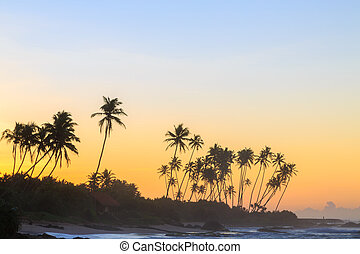Palm trees at the beach at sunset