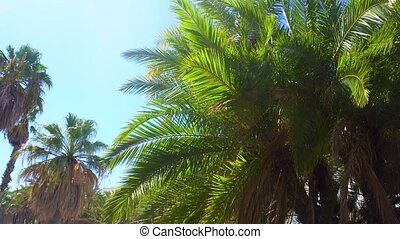 Palm trees at tropical coast against blue sky
