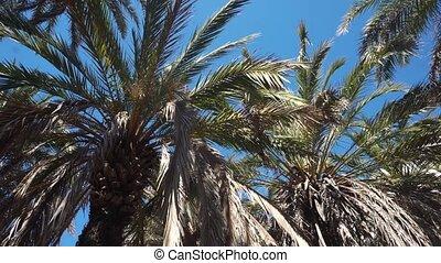 Palm trees at tropical coast against blue sky